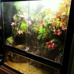 Terrarium/Paludarium – For Fish Fun Minburi