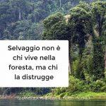 Selvaggio non è chi vive nella foresta, ma chi la distrugge!!!