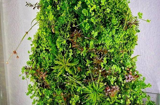 """The Planted Hill"" Wabikusa by Sascha Hoyer"