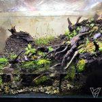 Paludarium – IVLC-1《Roots》