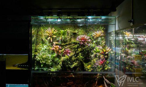 Paludarium –  M-rainforest IVLC-S31绝寂.