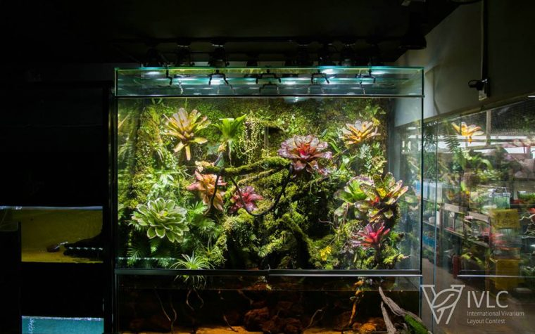 Paludarium –  M-rainforest IVLC-S31绝寂.