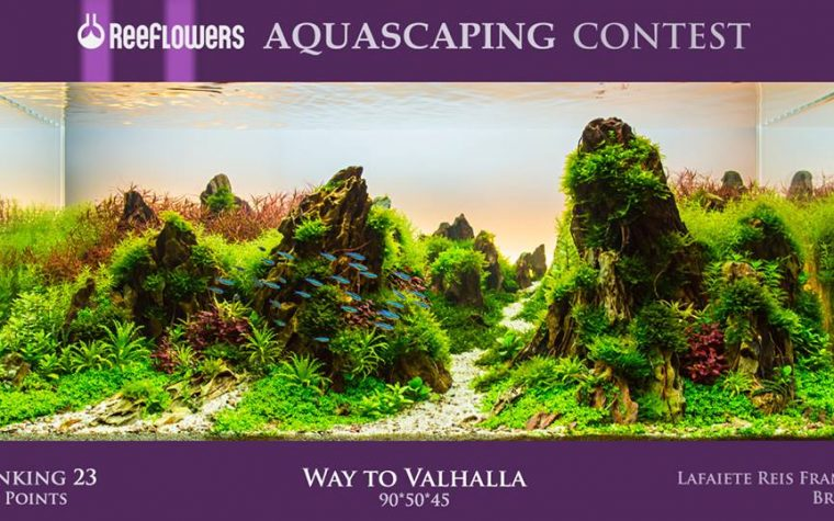 Reeflowers Aquascaping Contest 2017