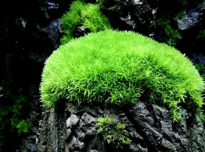 Moss of the world