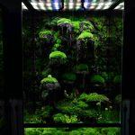 Vivarium Terrarium Plants and Immates – M-rainforest