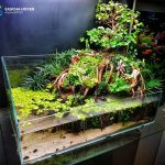 bonsai on the rock's paludarium – Sascha Hoyer Aqua Artist