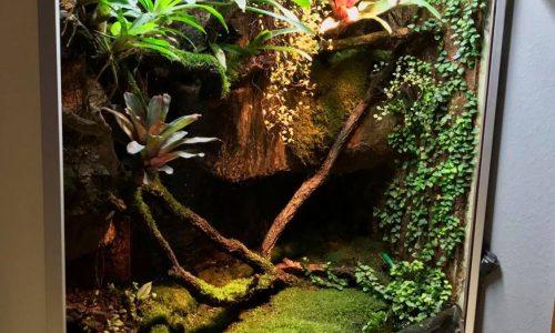 Regenwaldterrarium mit Azureus und Anthonyi Fröschen – Dennis Tryba