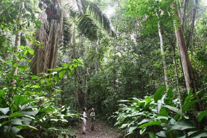 Il Perù crea un grande parco nazionale nella giungla amazzonica