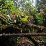 Foreste tropicali nel mondo: ECUADOR