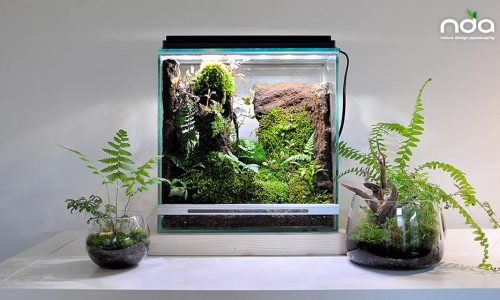 The first rainforest test artistic works. Nature Design Acquascaping