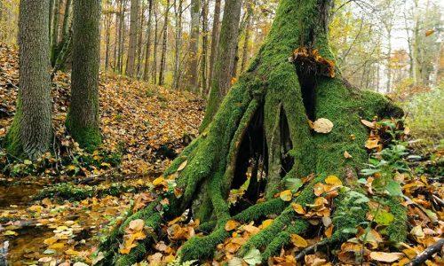 """Ispirazione per il terrario """"rain forest"""" – Inspiration, Masurian Lake District 2015-18. Piotr Mierzejewski."""