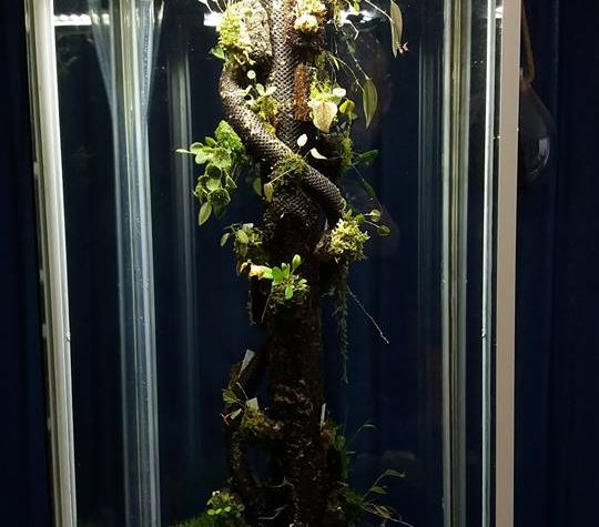 Changing a display cabinet into a Lepantarium. Serge Pasquasy