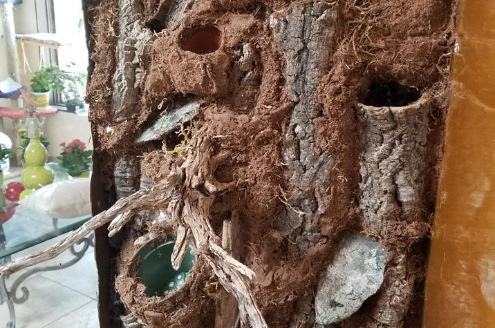 Vivarium for Crested Gecko  – Chrissy O'Meara Donovan