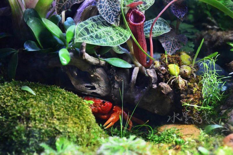 Paludarium – Crab Tank