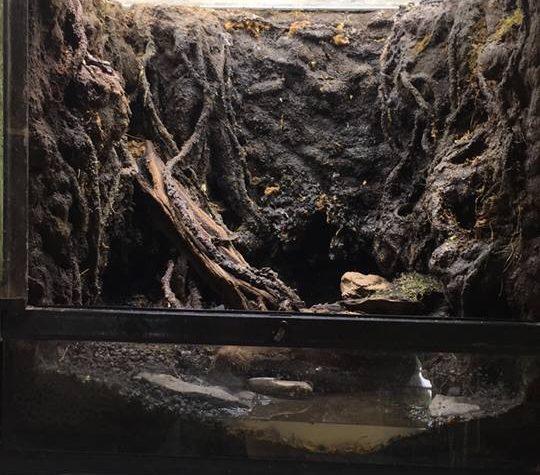 Terrarium project – Keith Amador