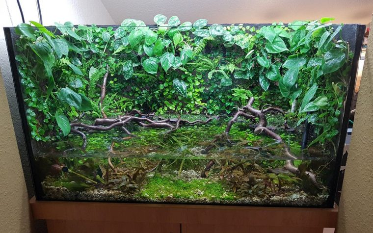 PALUDARIUM PHOTO GALLERY Paludarium – Marc Loker
