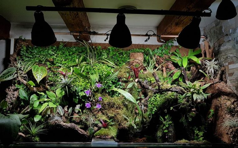 PALUDARIUM PHOTO GALLERY  Paludarium – Jerome Claudel