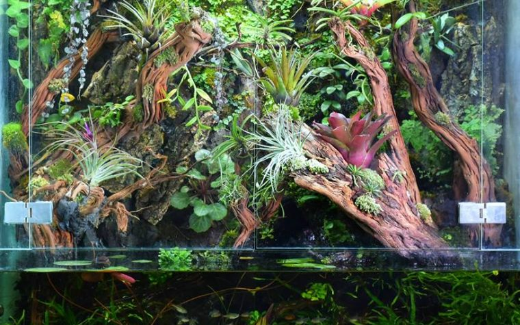 Rainforest Paludarium