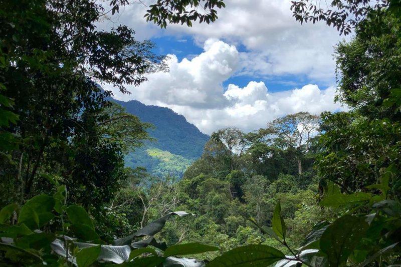 Le foreste tropicali nel mondo: Tingo Maria, Perù.