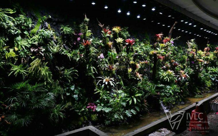 Terrarium Rainforest – IVLC