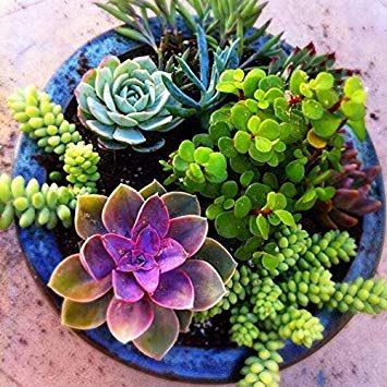 Come si realizzano giardini in miniatura (video)