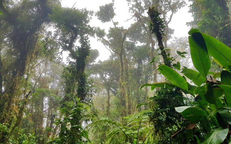 Monteverde Cloud Forest Reserve – Costarica