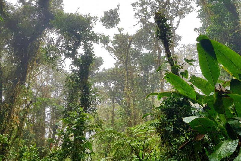 Monteverde Cloud Forest Reserve – Costarica