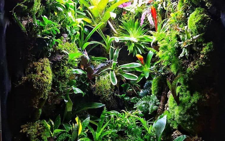 Rain Forest Terrarium – Ralf Hacker