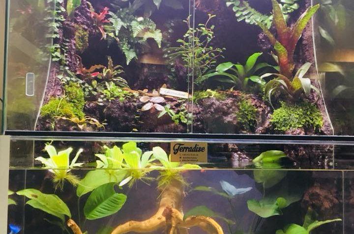 Naturium – A Rain Forest Inspiration