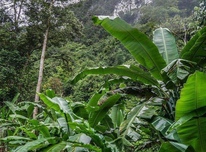 Rain Forest –  Malaysian Borneo. photo Karen Randall