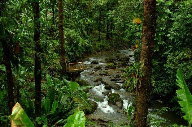 """Il """"miracolo verde"""" del Costa Rica: raddoppiato il numero delle sue foreste pluviali in 30 anni."""