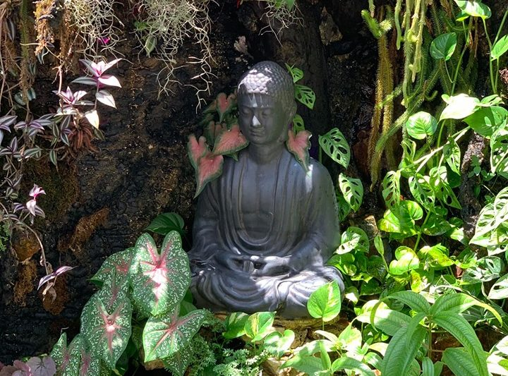 Vihara Garden – Thiết Kế Tường Rừng Cây Xanh Paludarium.