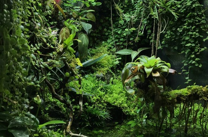 Paludarium – M-rainforest -IVLC