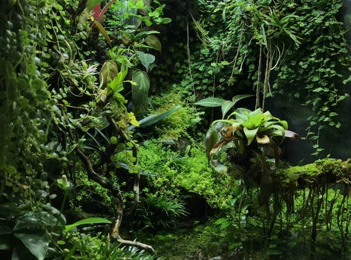 Paludarium – M-rainforest -IVLC