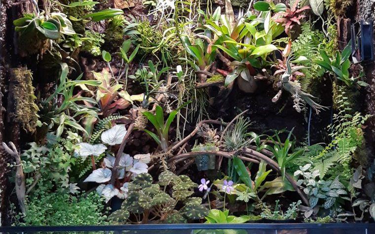 Orchidarium 90/60/80 cm.