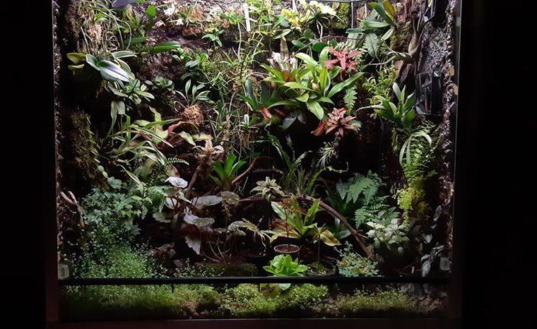 Orchidarium – Ricardas Dolgalis