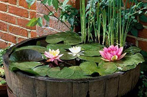 Mini Pond da interno