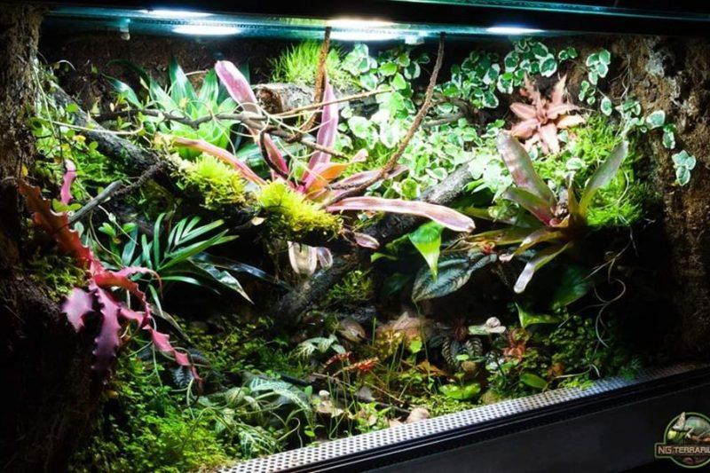 Terrarium – Nicolas Gereon
