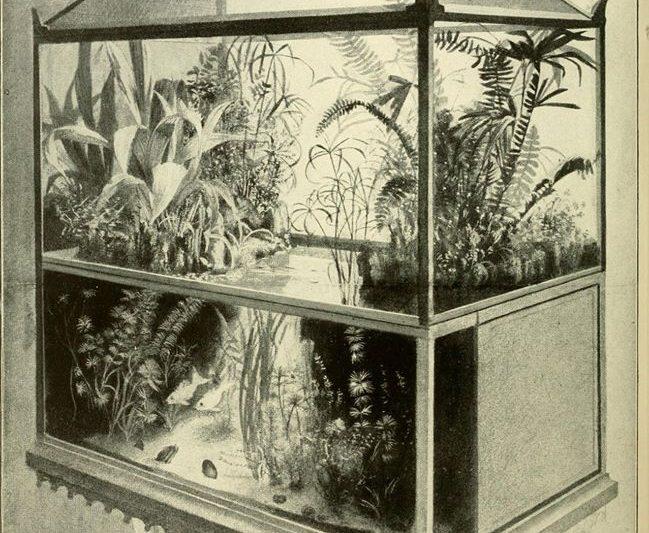 Paludari, acquari e terrari del passato