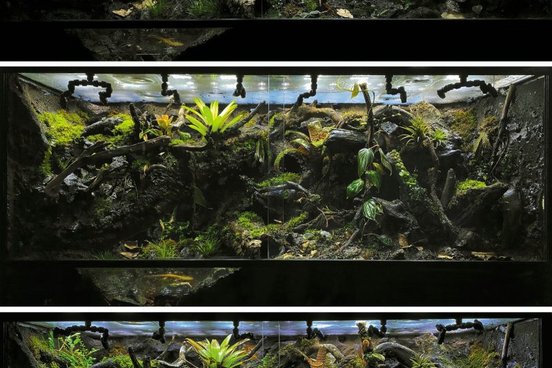 Terrarium M-Rainforest – The Green Secret Place (120x45x60 cm)