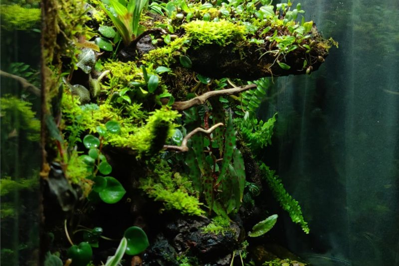 Terrarium – ivlc2020 – M-rainforest
