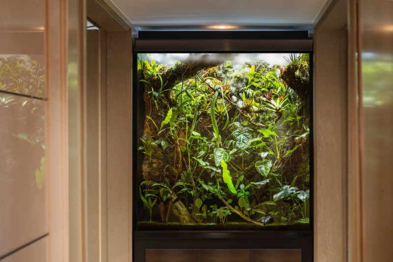 Terrarium M-Rainforest 2020