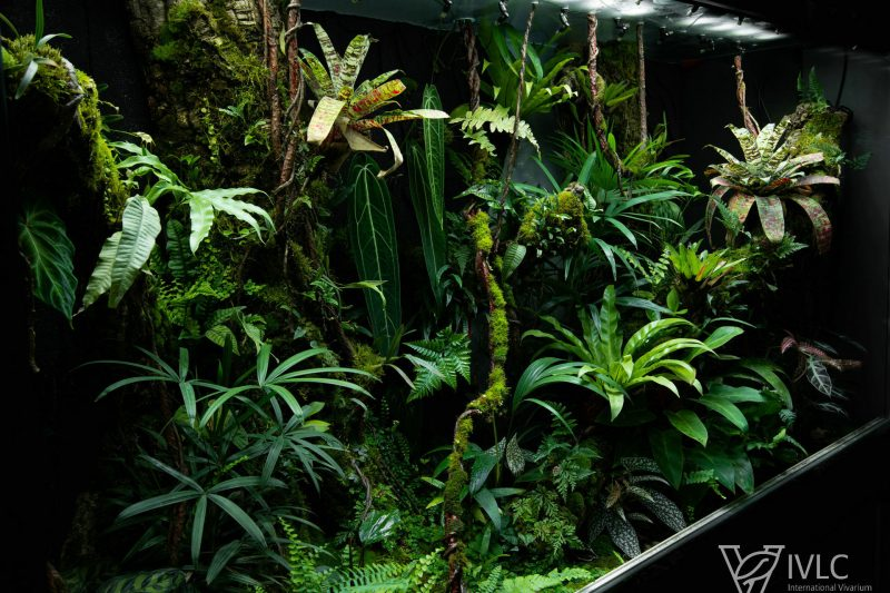 Terrarium M-Rainforest 2020 (230x70x135 cm)