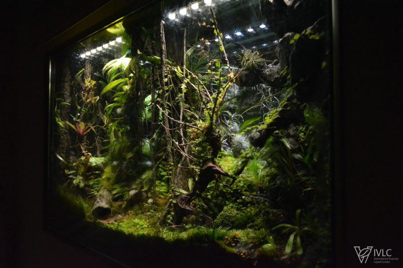 Terrarium – M-rainforest