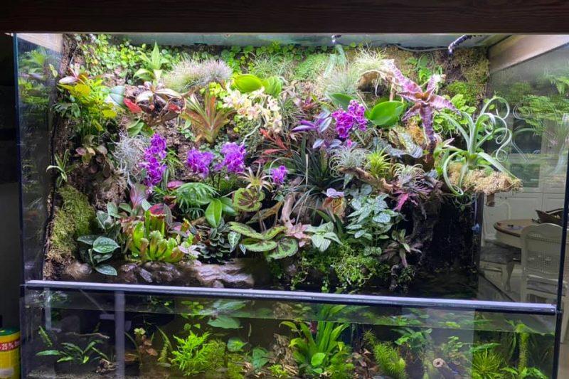 Paludarium-Orchidarium by Dvir Barkali