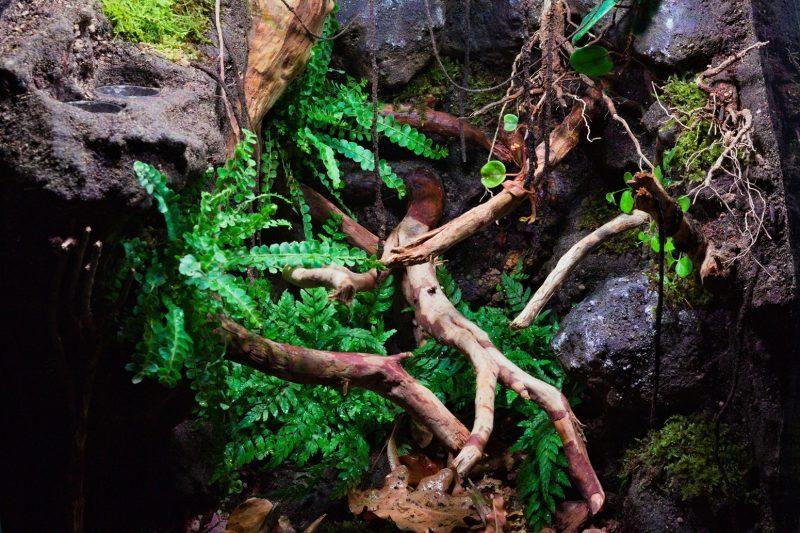 NG Terrariums – Naturalistico 45x45x60 Exoterra per Phelsuma laticauda